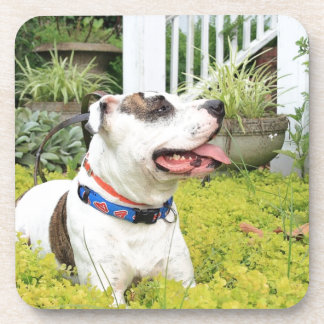 Pit Bull T-Bone Drink Coaster