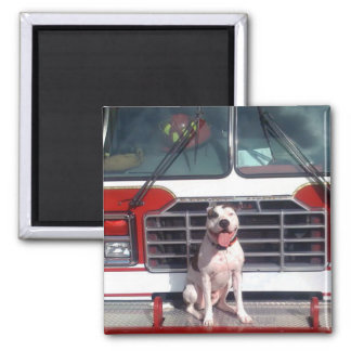 Pit Bull T-Bone Fire House Dog Square Magnet