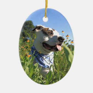 Pit Bull T-Bone Spring Ceramic Oval Ornament