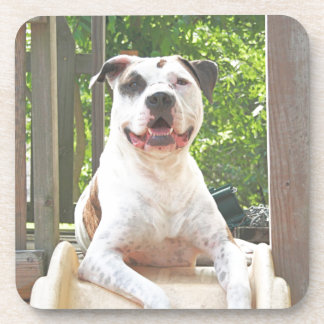 Pit Bull T-Bone's Tree House Coaster