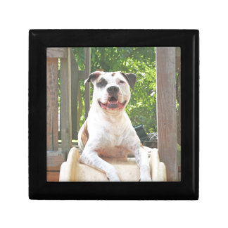 Pit Bull T-Bone's Tree House Jewelry Box