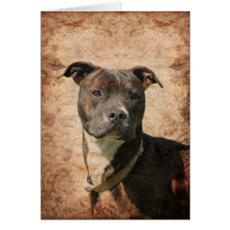 Pit Bull Terrier Card