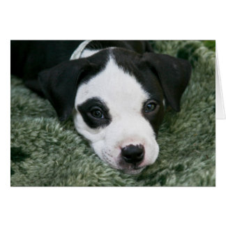 """Pit Bull Terrier Pup Card - """"Angie"""""""