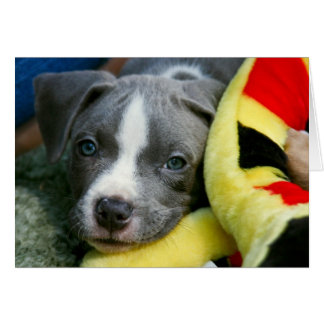 """Pit Bull Terrier Pup Card - """"Mikey"""""""