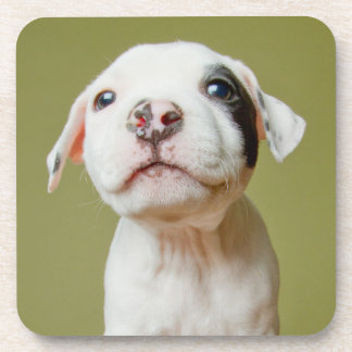 Pit Bull With Black Spotted Eye Coaster