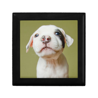 Pit Bull With Black Spotted Eye Trinket Box