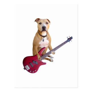 Pit Bull with Guitar Postcard