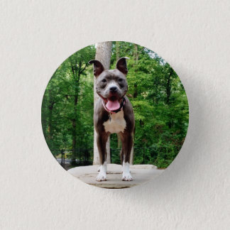 Pit in the Park 1 Inch Round Button