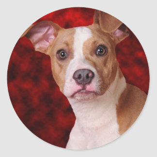 Pitbull beauty classic round sticker