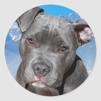 Pitbull Classic Round Sticker
