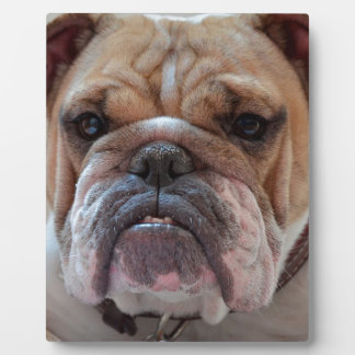Pitbull Dog Animal Plaque