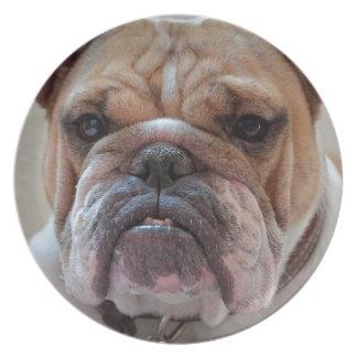 Pitbull Dog Animal Plate