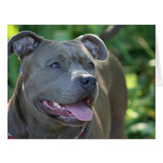 Pitbull dog large greeting card