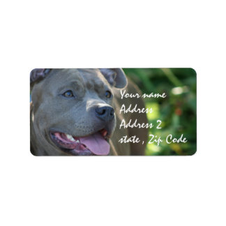 Pitbull Dog Label