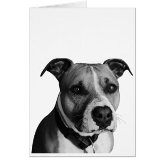 Pitbull dog pet card