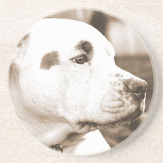 pitbull dog sepia color hate deed not breed beverage coasters