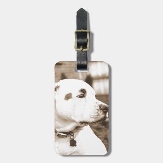 pitbull dog sepia color hate deed not breed luggage tag