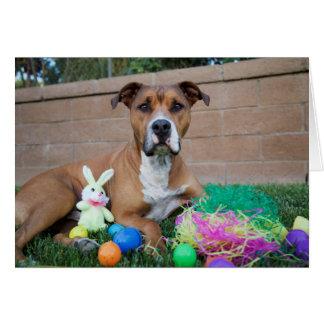 Pitbull Easter Card