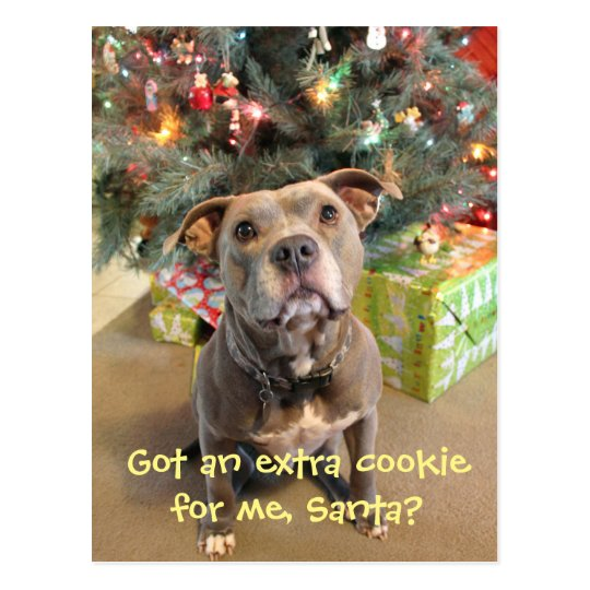 Pitbull Extra Cookie Christmas Postcard