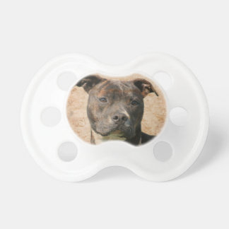 Pitbull face pacifier