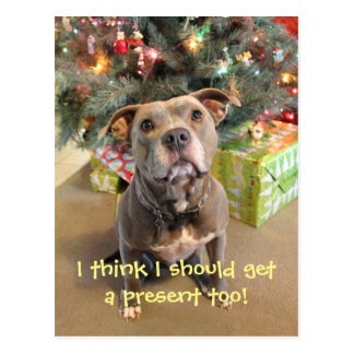 Pitbull I Want a Present Christmas Postcard
