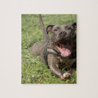 Pitbull In Grass Jigsaw Puzzle