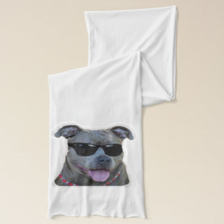 Pitbull in sunglasses scarf