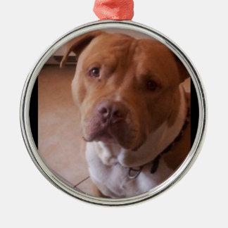 pitbull metal ornament