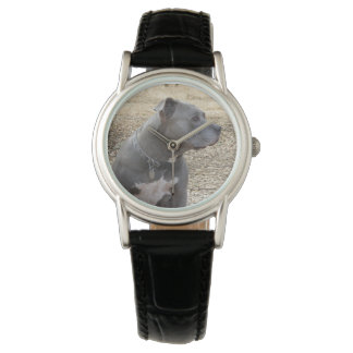 Pitbull Profile Women's Watch