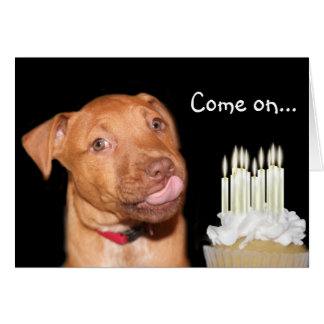 Pitbull puppy birthday greeting card