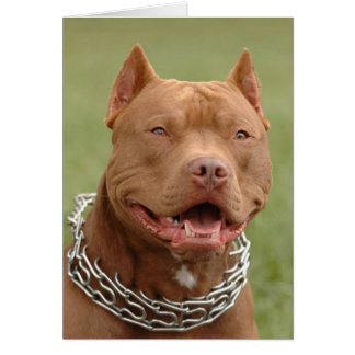Pitbull Puppy Dog Blank Note Card