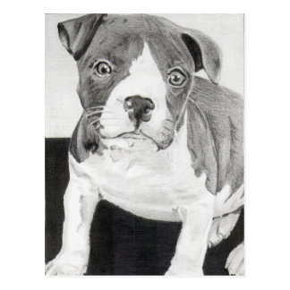 Pitbull Puppy in pencil 3 by Jacob Grimm Postcard