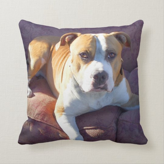 Pitbull terrier dog throw pillow