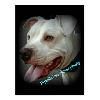 Pitbulls love unconditionally postcard