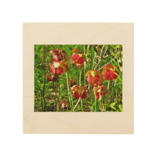 Pitcher Plant Flower Wall Picture Wood Print