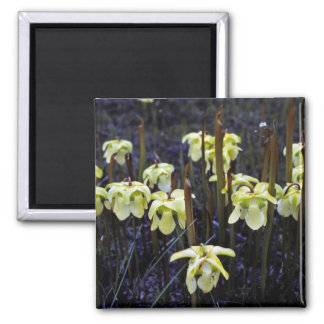 Pitcher Plants Square Magnet