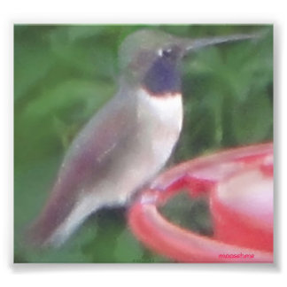 Pix-elated Humming Bird Pic Photographic Print