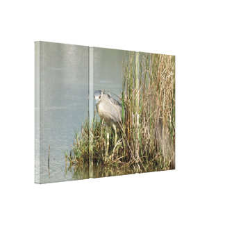 PixDezines Blue Heron, Big Island Canvas Print