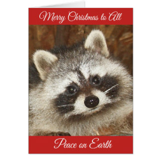 Pixie Raccoon Christmas Greetings Card