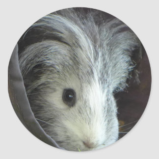 Pixle the guinea pig classic round sticker