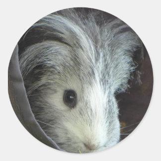 Pixle the guinea pig round sticker