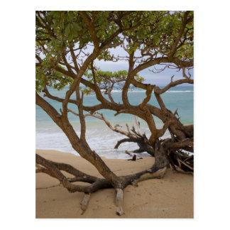 Plage de baie de Paia, Maui, Hawaï, Etats-Unis Cartes Postales