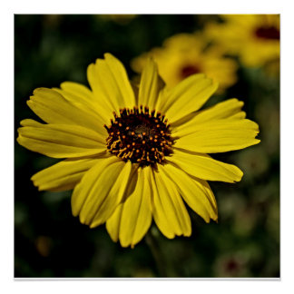 Plain simple yellow daisy poster print. perfect poster