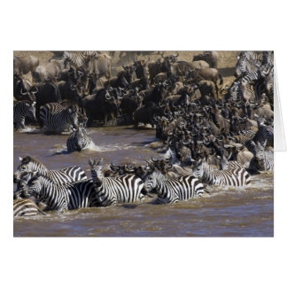 Plains Zebra (Equus quagga) and Blue Wildebeest Card