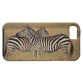 Plains Zebra (Equus quagga) pair grooming, Masai iPhone 5 Cover