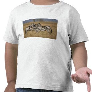 Plains Zebra (Equus quagga) pair grooming, Masai Tee Shirts