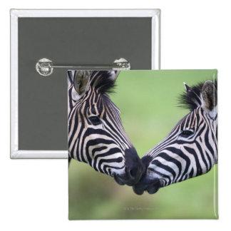 Plains zebra (Equus quagga) pair interacting 2 Inch Square Button
