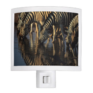 Plains Zebras (Equus Quagga) Herd Drinking Night Lite
