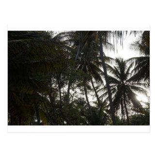 Plam trees in Mayaro Beach Postcard