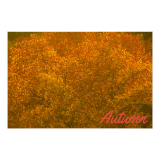 Plane tree in Autumn Poster